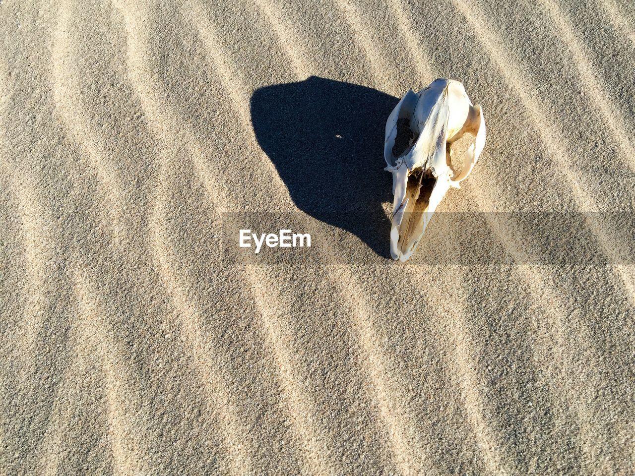 Close-Up Of Animal Skull On Sand