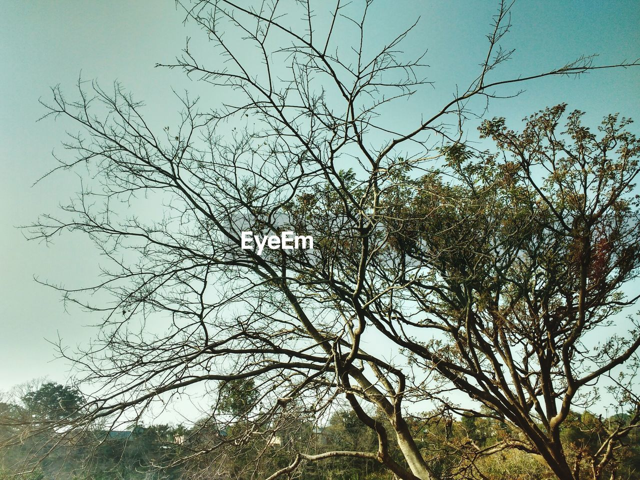 tree, low angle view, nature, outdoors, branch, beauty in nature, bare tree, no people, tranquility, day, clear sky, sky, scenics, growth