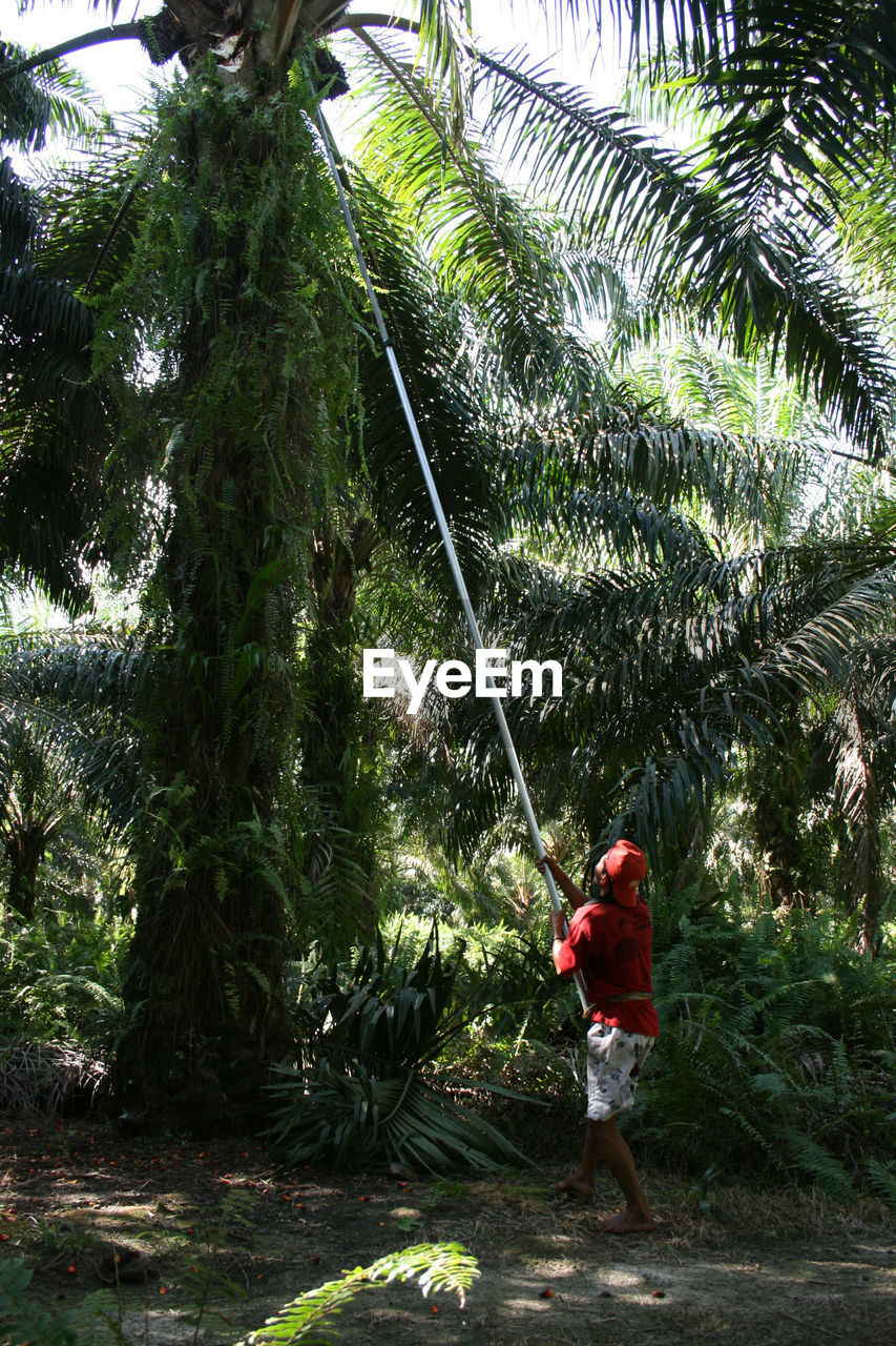 plant, tree, one person, real people, growth, nature, full length, day, green color, leisure activity, holding, palm tree, lifestyles, standing, men, casual clothing, outdoors, tropical climate, forest