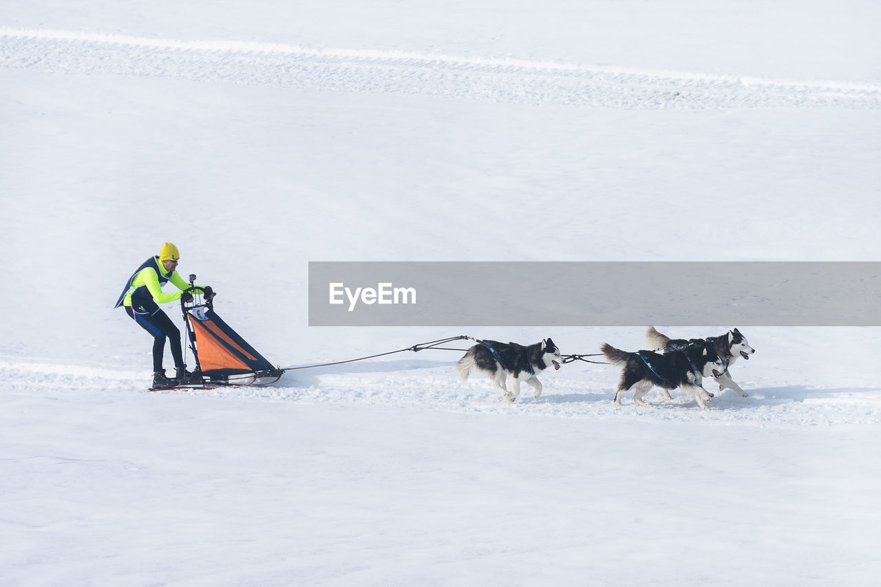 PERSON WITH DOG ON SNOW