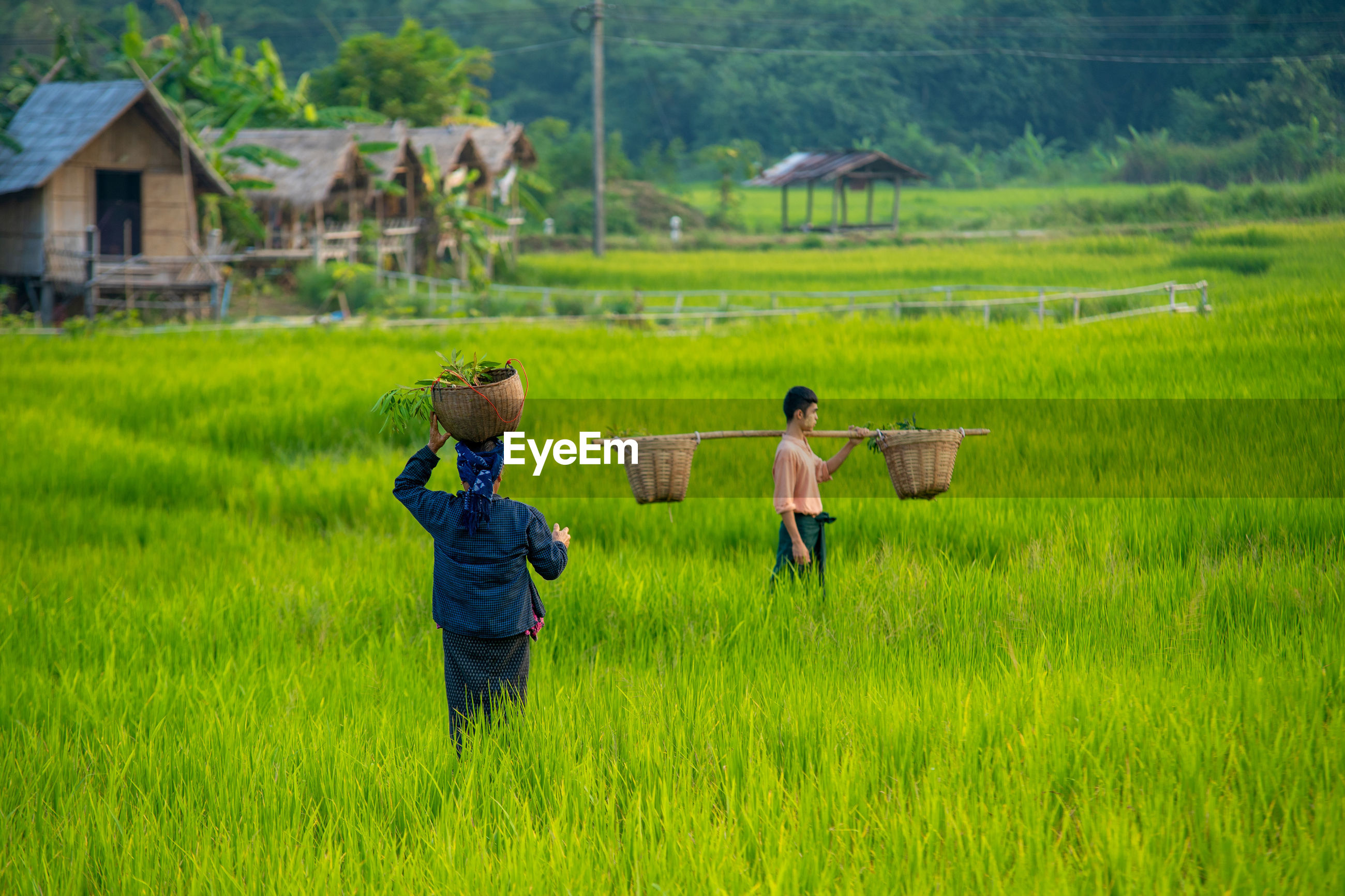 REAR VIEW OF FATHER AND DAUGHTER IN FIELD