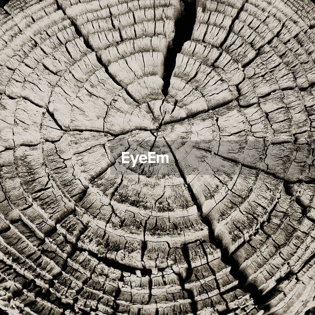 backgrounds, full frame, textured, bark, pattern, tree, tree stump, close-up, cracked, no people, nature, tree ring, natural pattern, cross section, day, wood - material, outdoors, plant, concentric, timber
