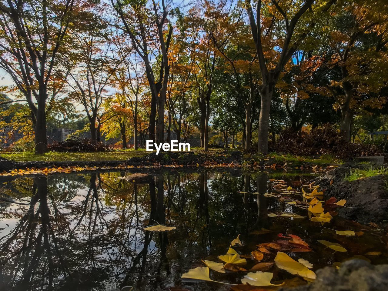 SCENIC VIEW OF LAKE AMIDST TREES DURING AUTUMN