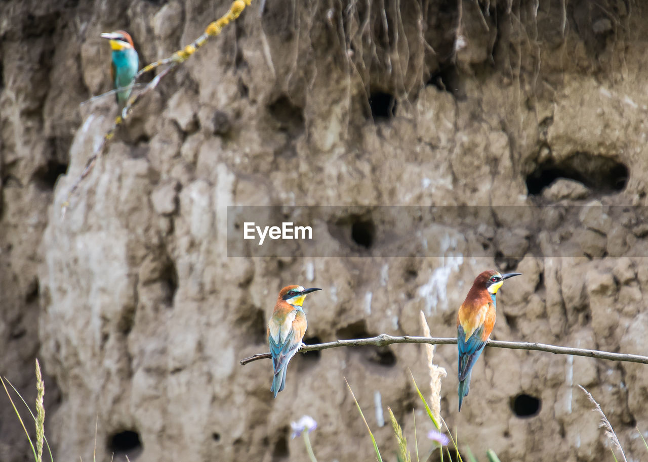 animal themes, bird, group of animals, vertebrate, animal, animal wildlife, animals in the wild, perching, no people, parrot, two animals, day, focus on foreground, nature, outdoors, rock, solid, rock - object, rope
