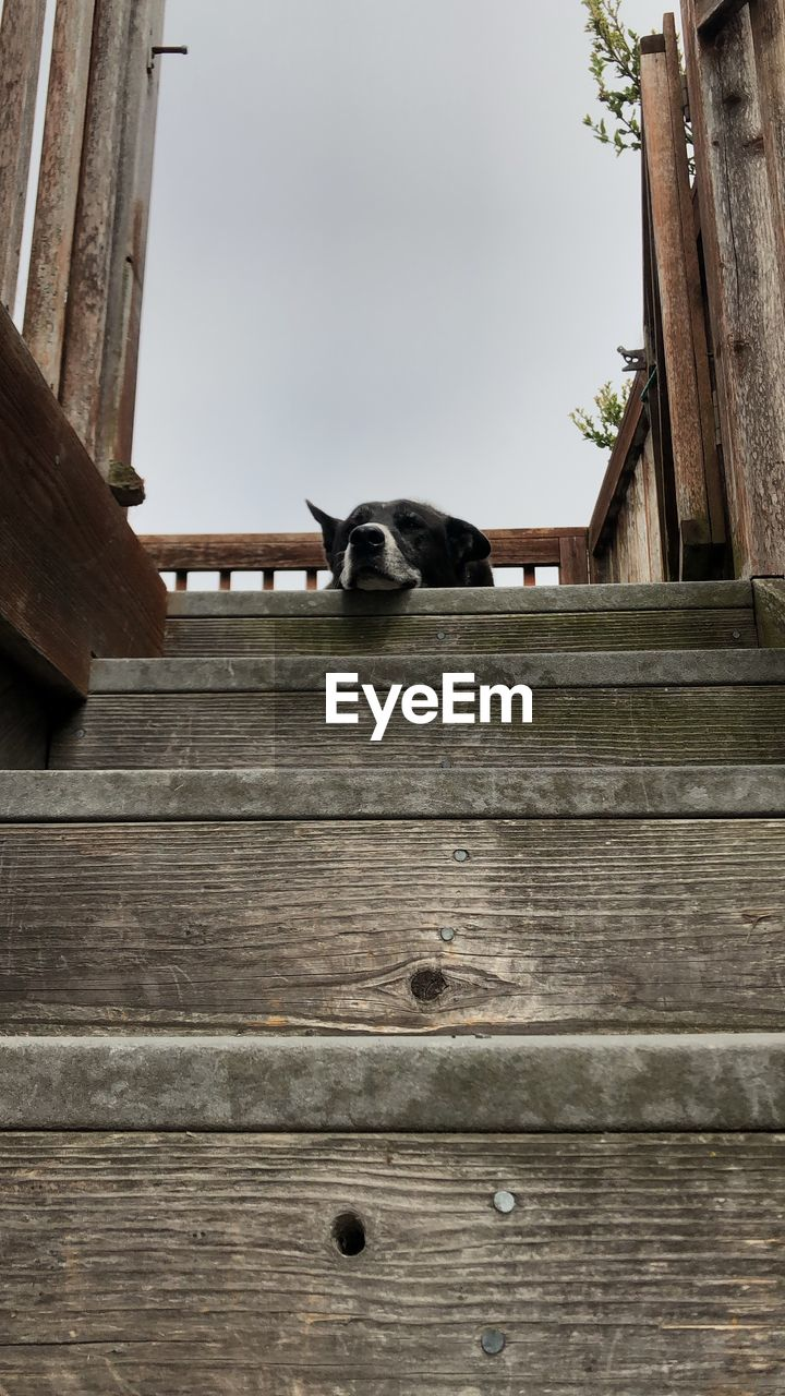 Low angle view of dog sleeping on staircase outdoors