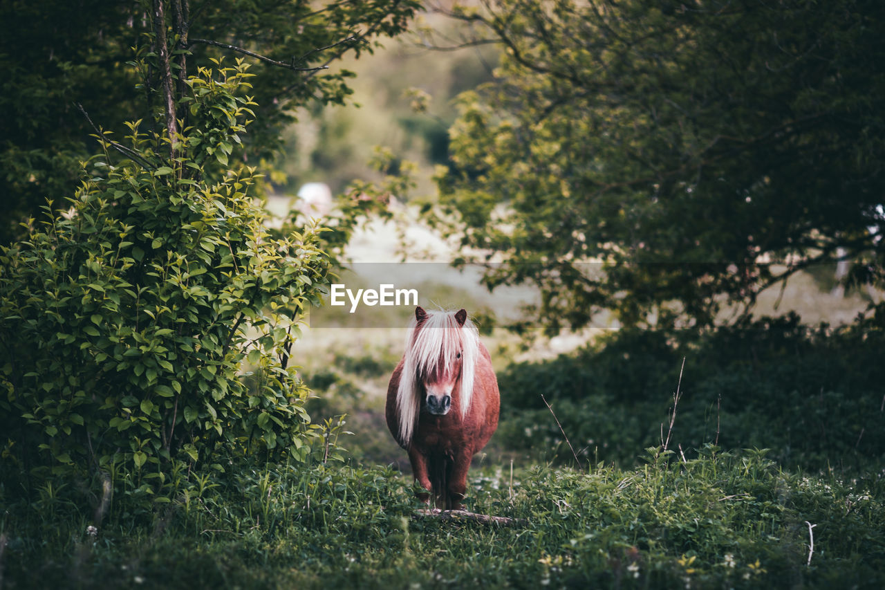 Portrait of pony horse standing on field in forest