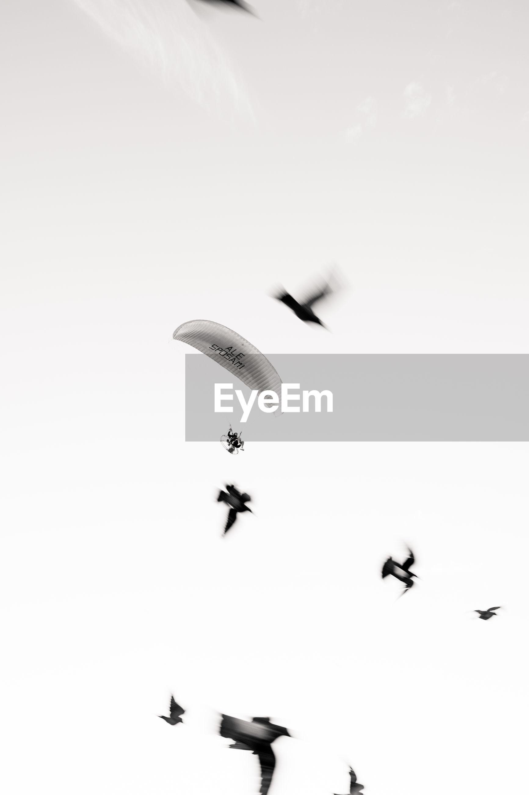 BIRDS FLYING IN THE SKY