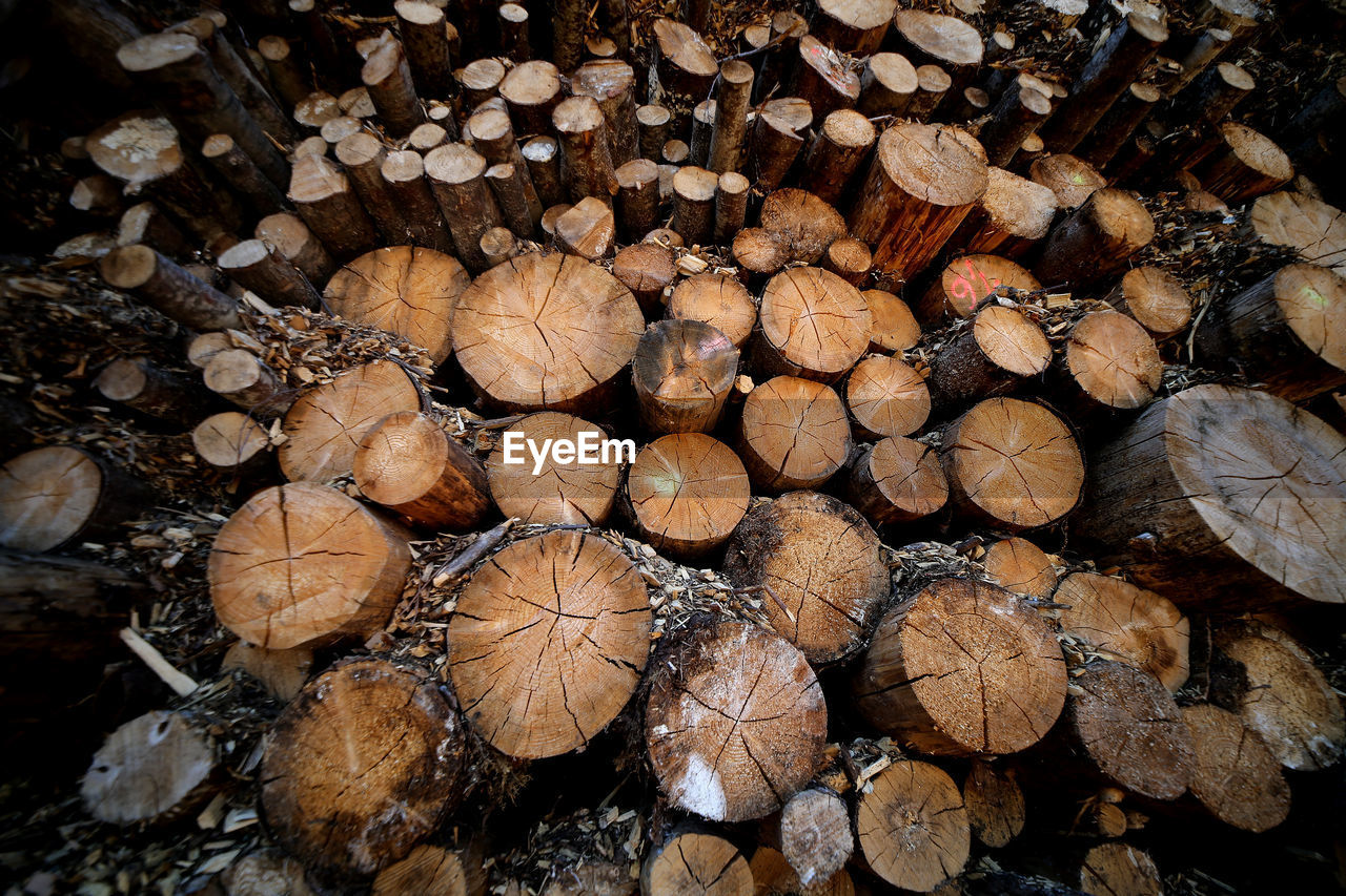 CLOSE-UP OF LOGS IN FOREST