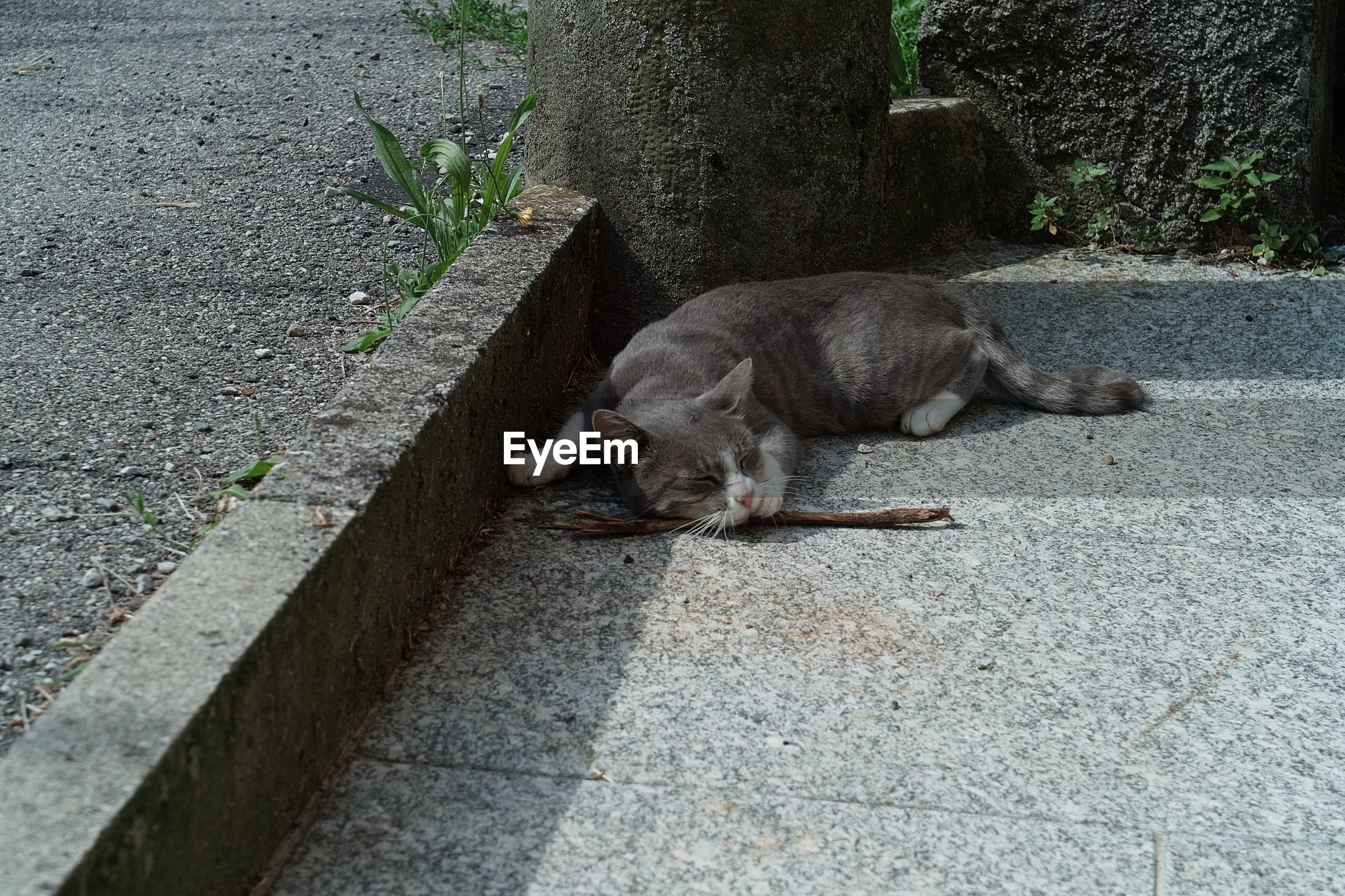 HIGH ANGLE VIEW OF CATS SLEEPING ON FOOTPATH