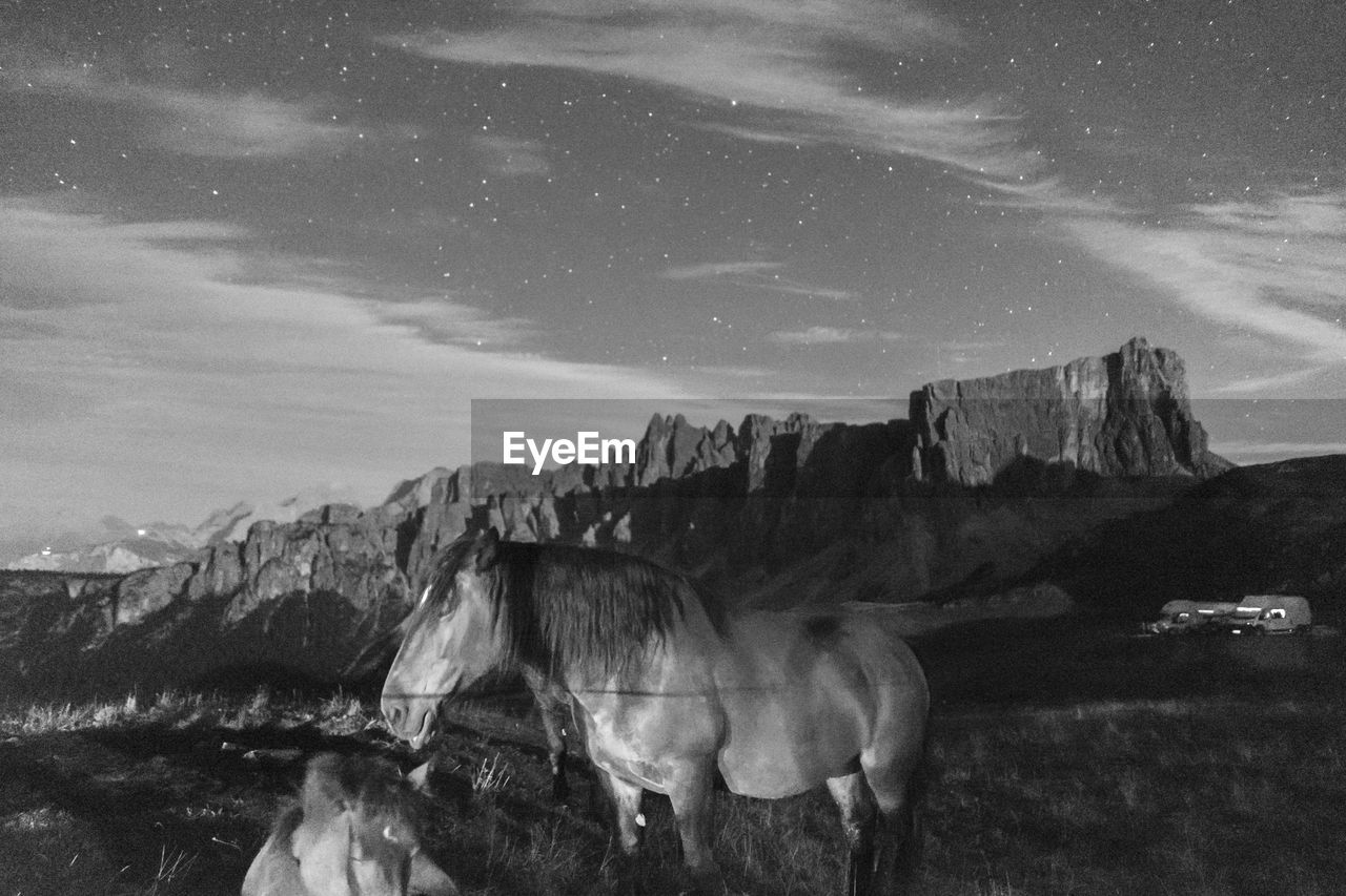 View of horse on mountain against sky at night