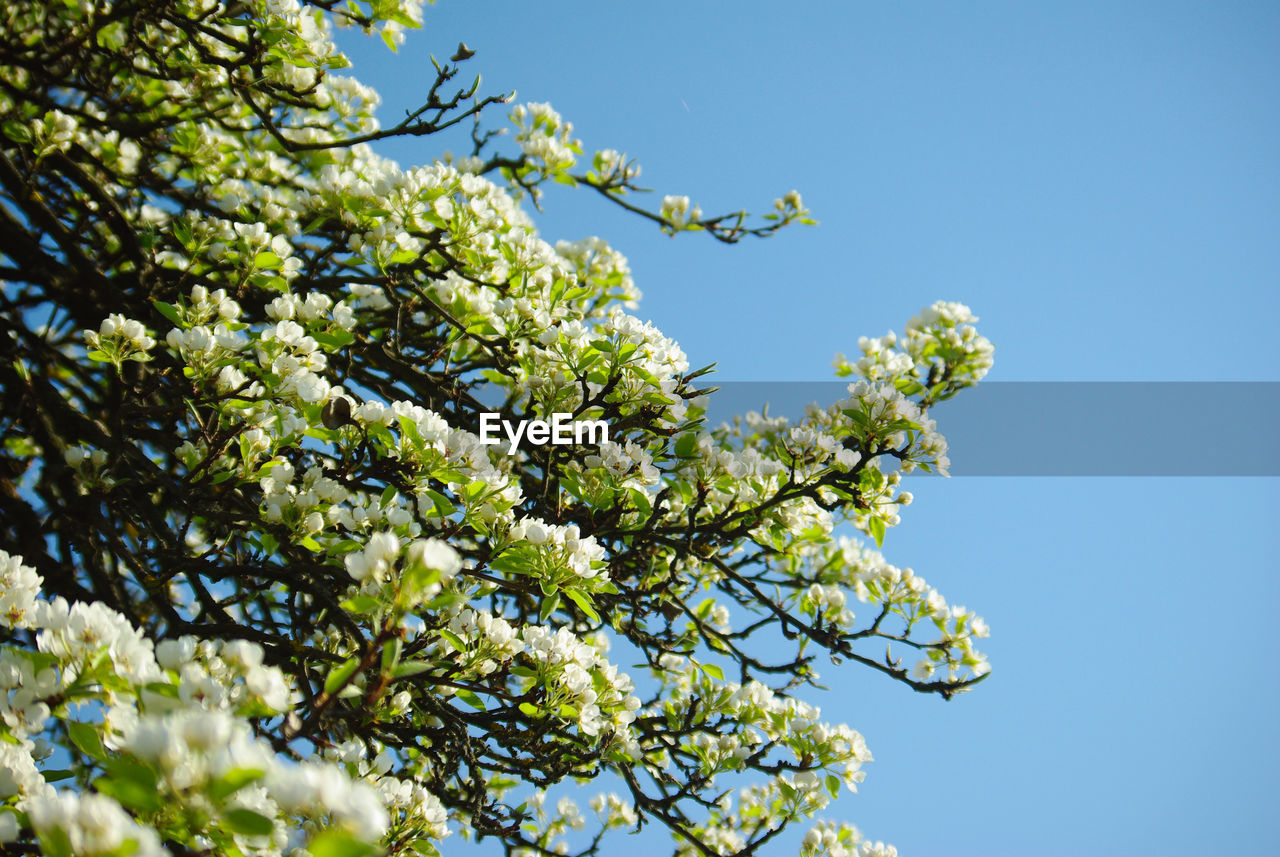 plant, growth, low angle view, sky, beauty in nature, flower, tree, flowering plant, no people, nature, freshness, day, clear sky, branch, fragility, vulnerability, green color, blue, sunlight, outdoors, spring