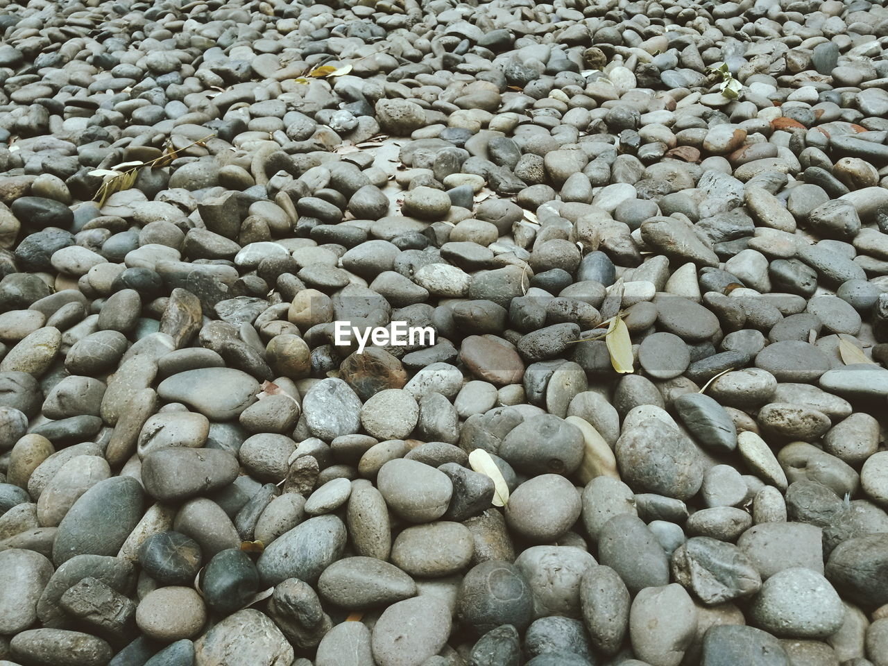 pebble, beach, pebble beach, shore, full frame, backgrounds, abundance, large group of objects, no people, nature, day, outdoors, close-up, beauty in nature