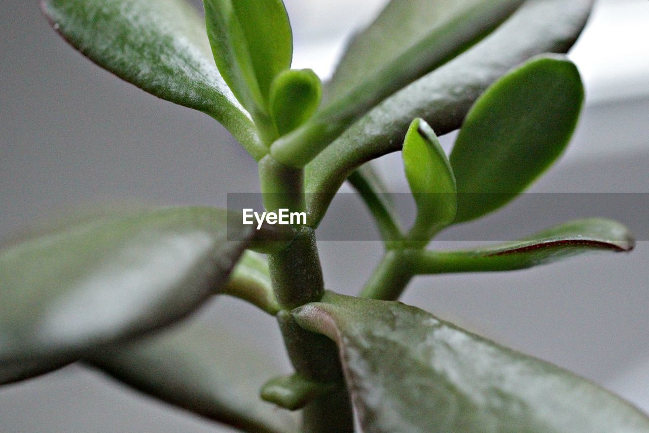 plant, growth, close-up, beauty in nature, leaf, plant part, no people, green color, selective focus, nature, day, focus on foreground, freshness, fragility, vulnerability, outdoors, flower, macro, natural pattern, tranquility, sepal