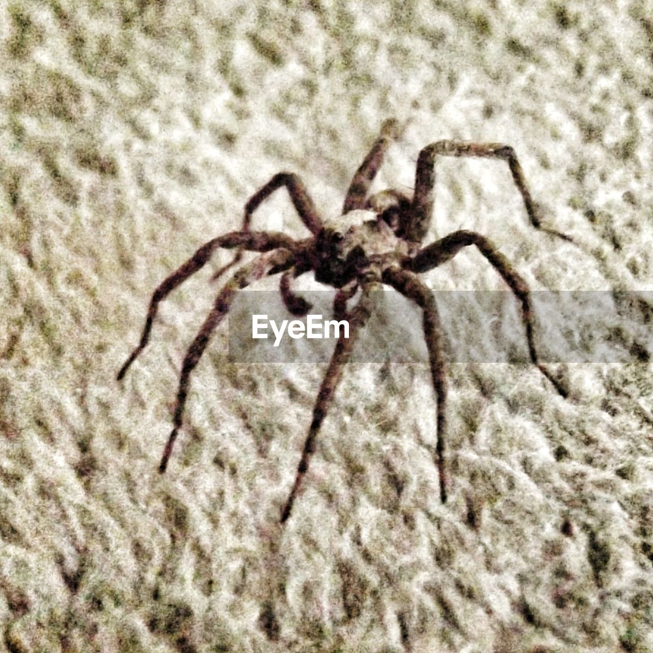 spider, one animal, animal themes, animals in the wild, close-up, no people, day, animal wildlife, animal leg, indoors, nature
