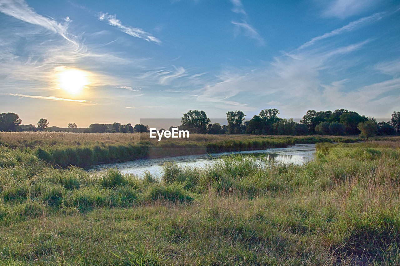 sky, tranquility, tranquil scene, plant, scenics - nature, grass, beauty in nature, water, environment, landscape, field, nature, cloud - sky, land, non-urban scene, lake, no people, growth, tree, outdoors, swamp