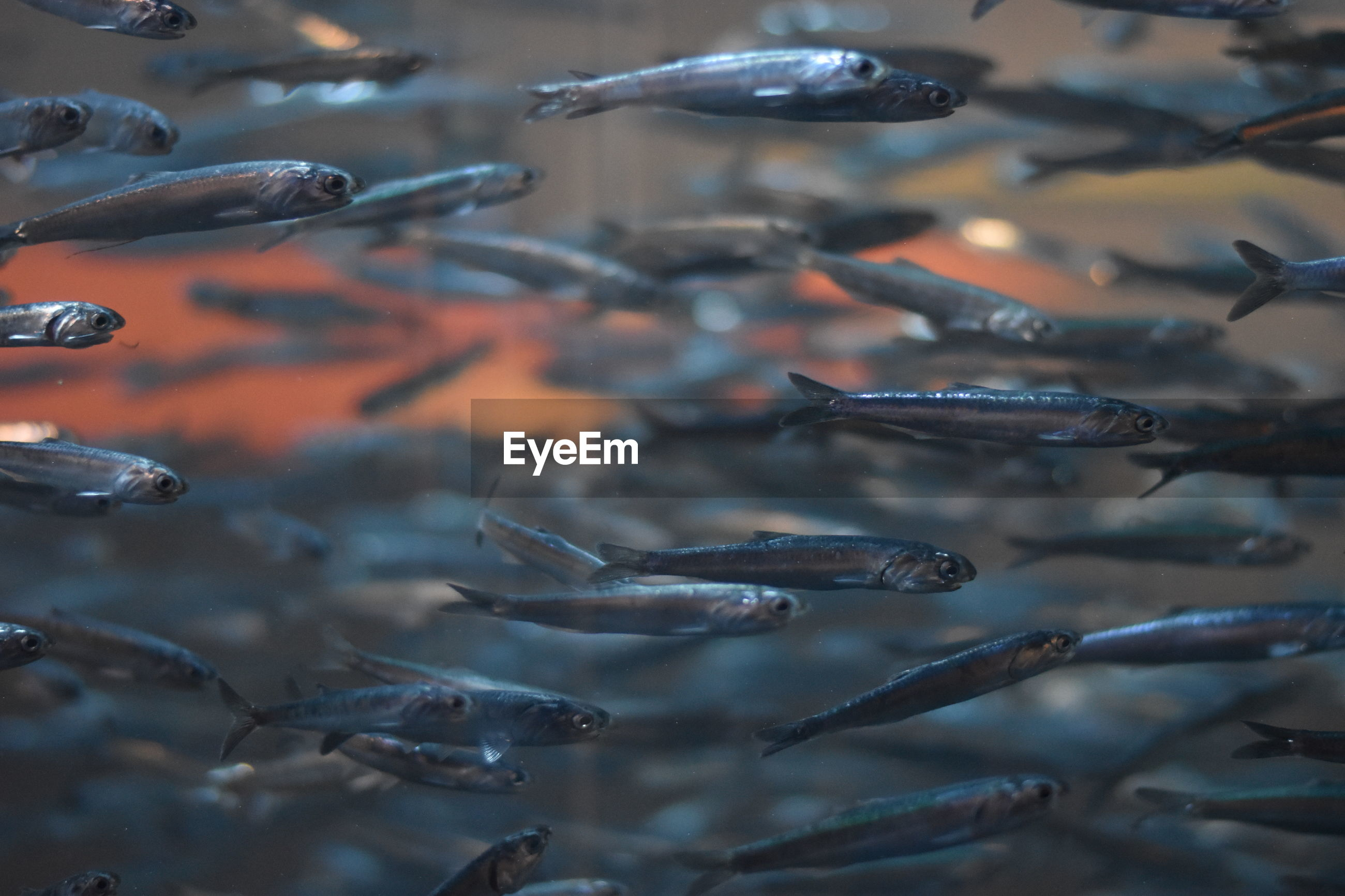 School of fish swimming in tank at aquarium