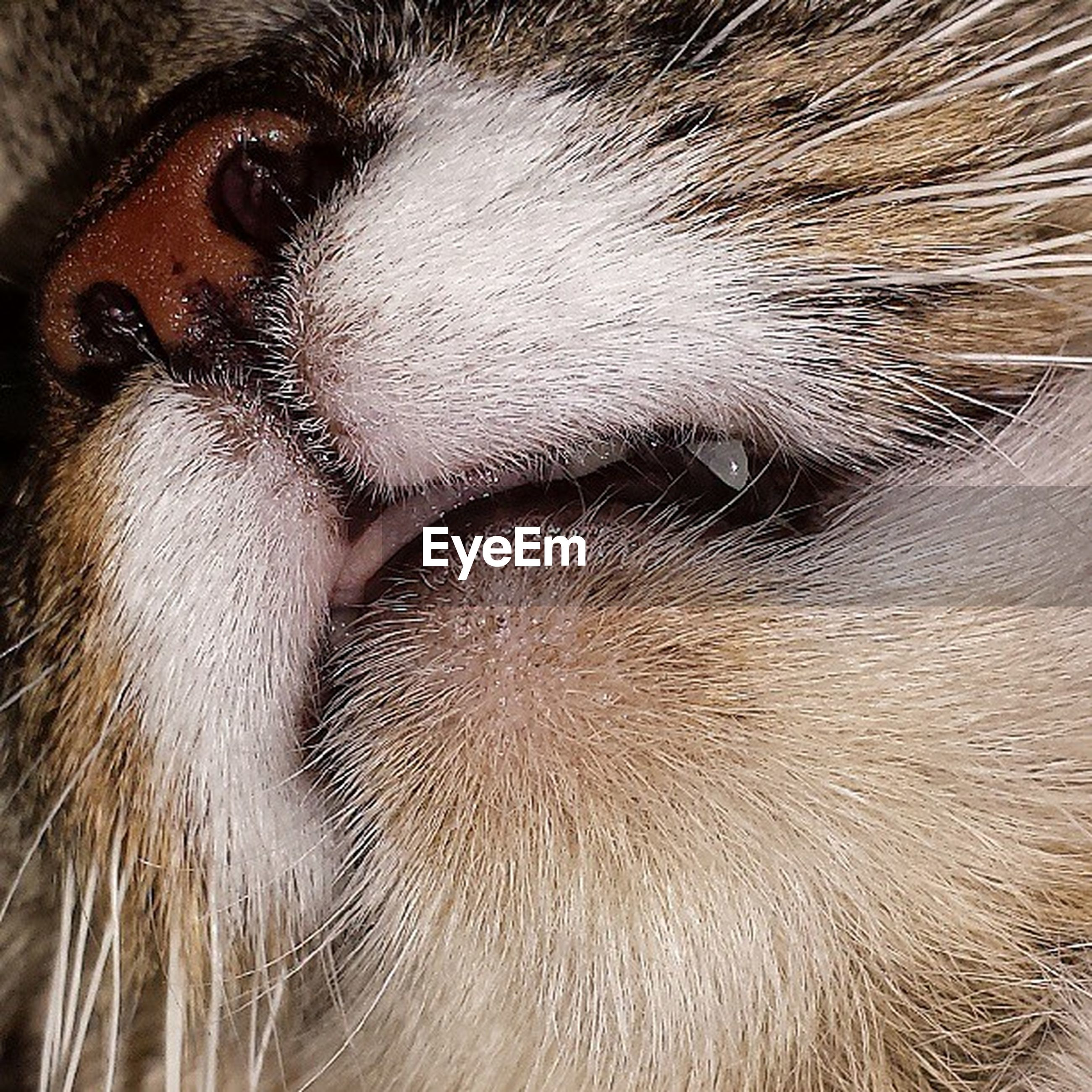 animal themes, one animal, pets, domestic animals, mammal, close-up, animal hair, domestic cat, full frame, animal body part, animal head, cat, whisker, backgrounds, animal eye, extreme close-up, part of, detail, feline, extreme close up