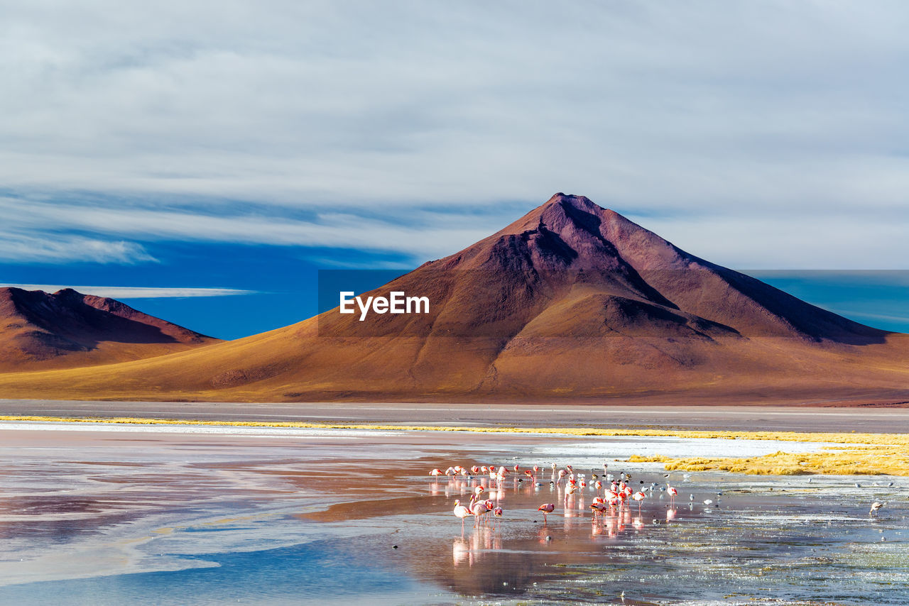 Flamingoes And Andean Volcano Against Cloudy Sky