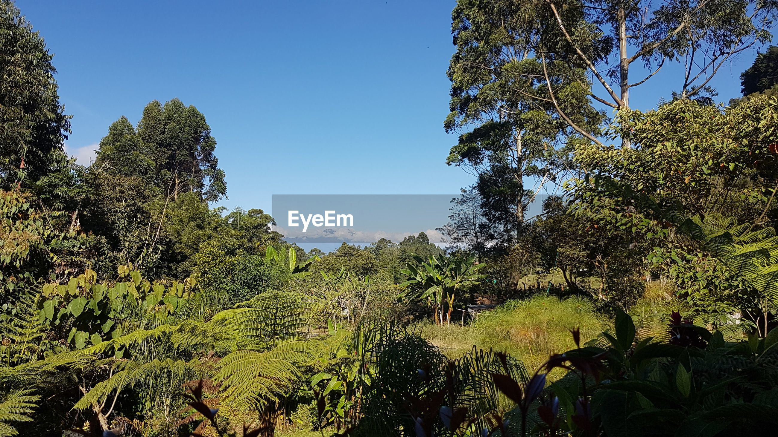 PLANTS GROWING ON LAND AGAINST CLEAR SKY