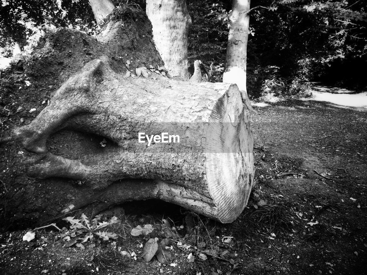 tree, plant, trunk, tree trunk, nature, day, land, close-up, no people, forest, outdoors, representation, art and craft, growth, animal body part, tranquility, park, field, sculpture, animal head