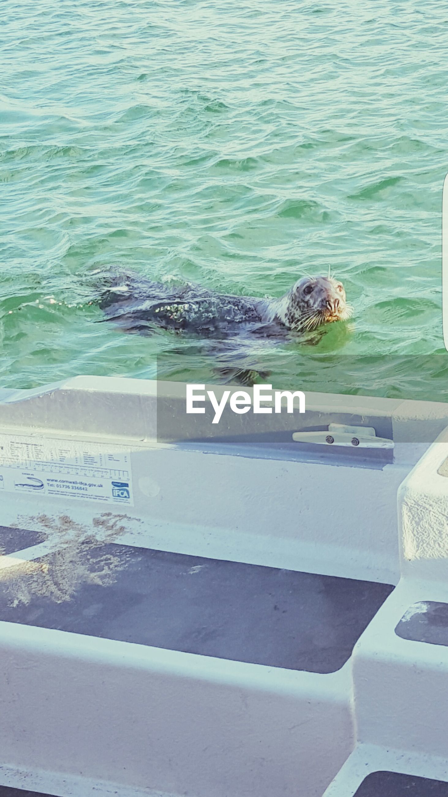 water, animal themes, one animal, animals in the wild, animal wildlife, high angle view, no people, day, mammal, swimming, nature, sea, outdoors, aquatic mammal