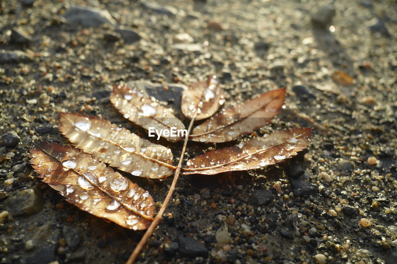 nature, one animal, day, animal themes, outdoors, animals in the wild, leaf, close-up, no people, fragility, beauty in nature