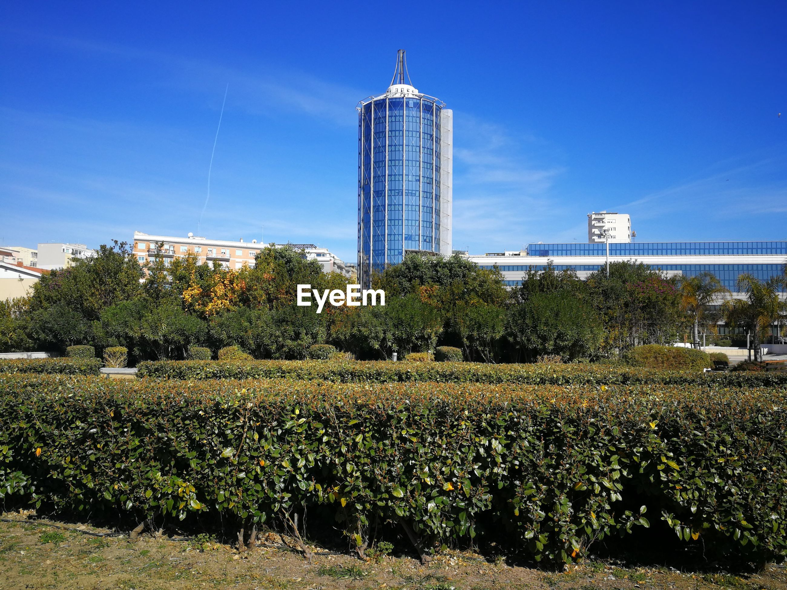 Plants growing on field by buildings against blue sky