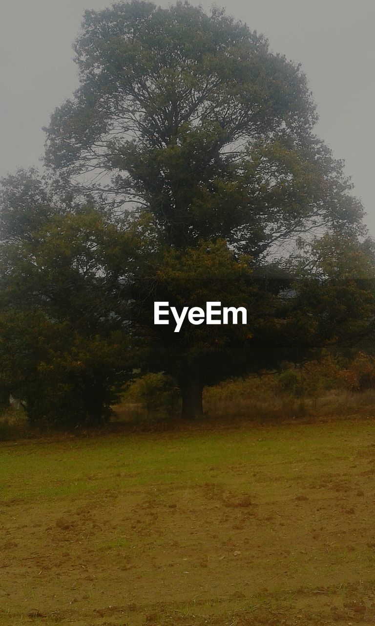 tree, nature, tranquility, landscape, growth, grass, field, no people, beauty in nature, outdoors, day, sky