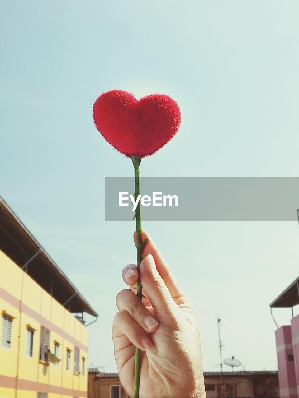 Low angle view of woman holding heart shaped rose against sky