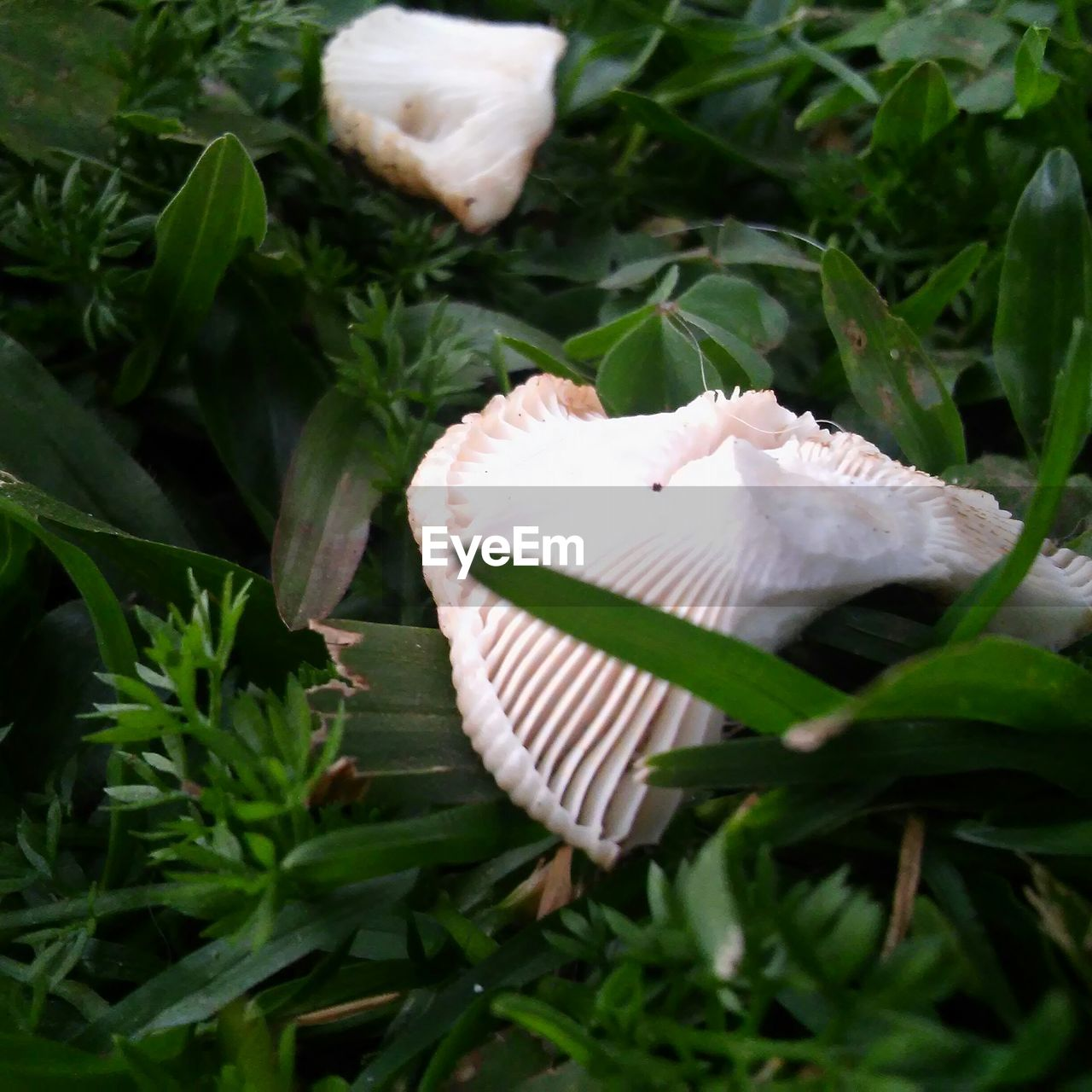 leaf, green color, growth, plant, nature, white color, day, high angle view, no people, one animal, outdoors, close-up, beauty in nature, flower, freshness, grass, animal themes, fragility, flower head, toadstool