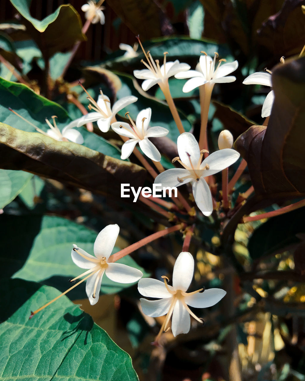 flower, flowering plant, growth, plant, close-up, leaf, freshness, fragility, beauty in nature, plant part, vulnerability, focus on foreground, nature, day, petal, flower head, inflorescence, white color, outdoors, selective focus