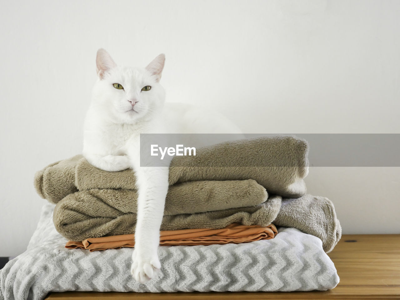 pets, domestic, domestic cat, domestic animals, one animal, animal themes, cat, mammal, indoors, animal, feline, relaxation, vertebrate, furniture, white color, no people, portrait, comfortable, looking at camera, home interior, whisker