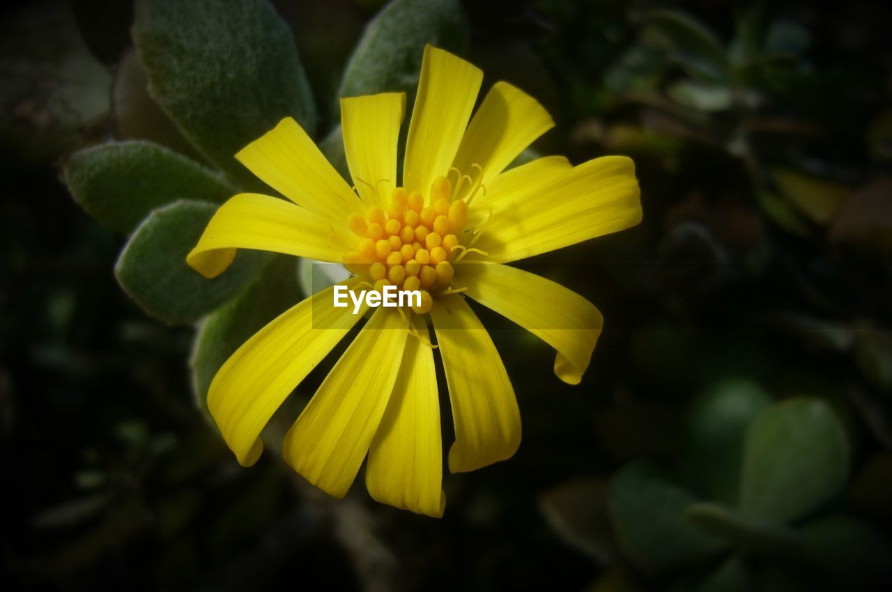 flower, petal, fragility, flower head, yellow, growth, beauty in nature, nature, freshness, blooming, plant, focus on foreground, close-up, pollen, no people, day, outdoors
