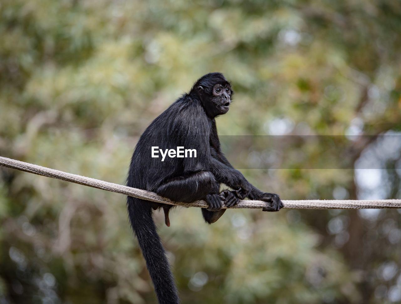 Close-Up Of Monkey Sitting On Rope