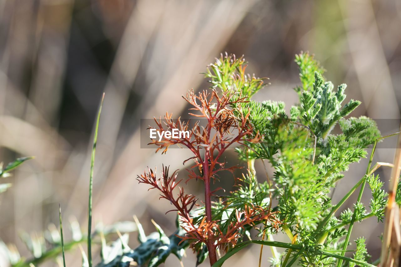 growth, plant, beauty in nature, selective focus, day, nature, close-up, freshness, no people, green color, flower, flowering plant, focus on foreground, plant part, outdoors, leaf, botany, sunlight, fragility, vulnerability, plant nursery
