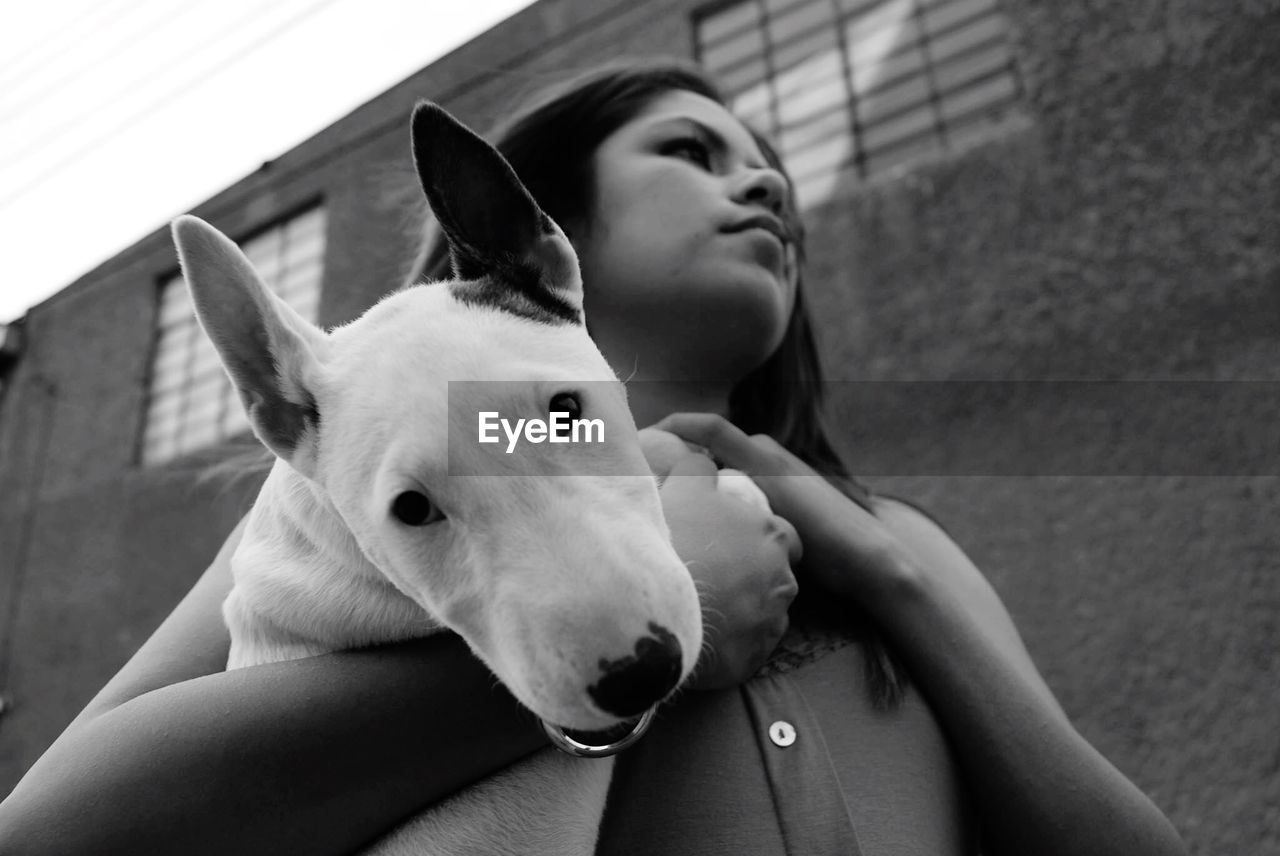 Low Angle View Of Young Woman Holding Bull Terrier