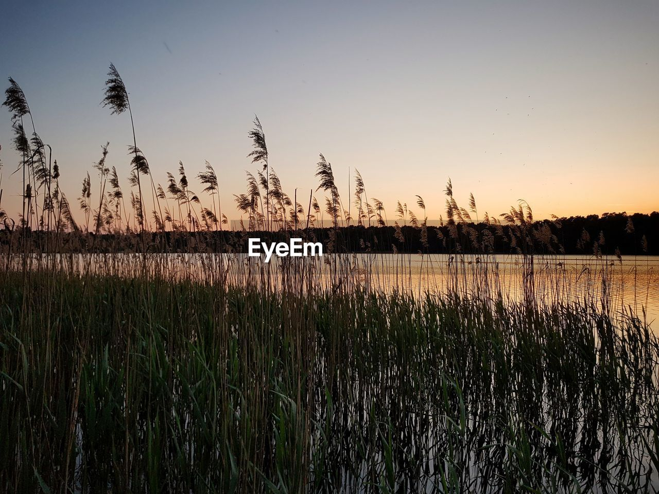 sky, tranquility, beauty in nature, plant, scenics - nature, sunset, growth, tranquil scene, nature, landscape, land, field, no people, water, rural scene, non-urban scene, environment, grass, agriculture, outdoors, timothy grass
