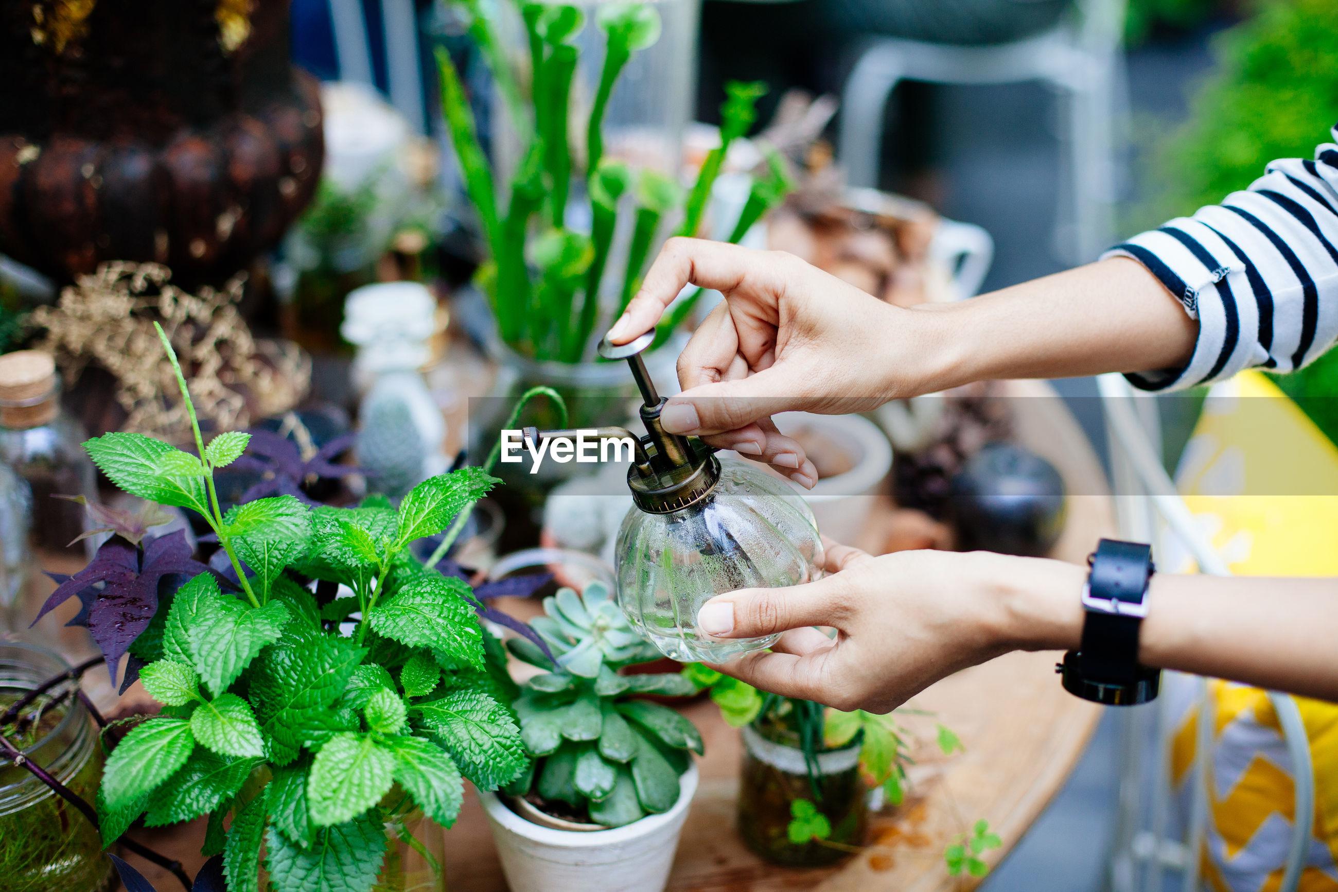 Florist spraying water on plants