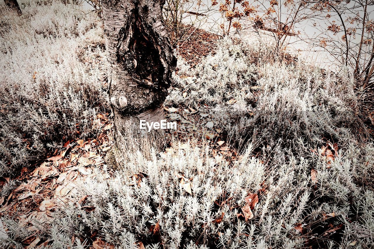 tree, no people, day, nature, winter, full frame, backgrounds, close-up, branch, outdoors, beauty in nature