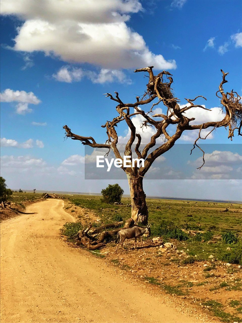 landscape, sky, tree, cloud - sky, nature, tranquility, tranquil scene, scenics, day, outdoors, arid climate, bare tree, plant, no people, beauty in nature, dead tree, desert