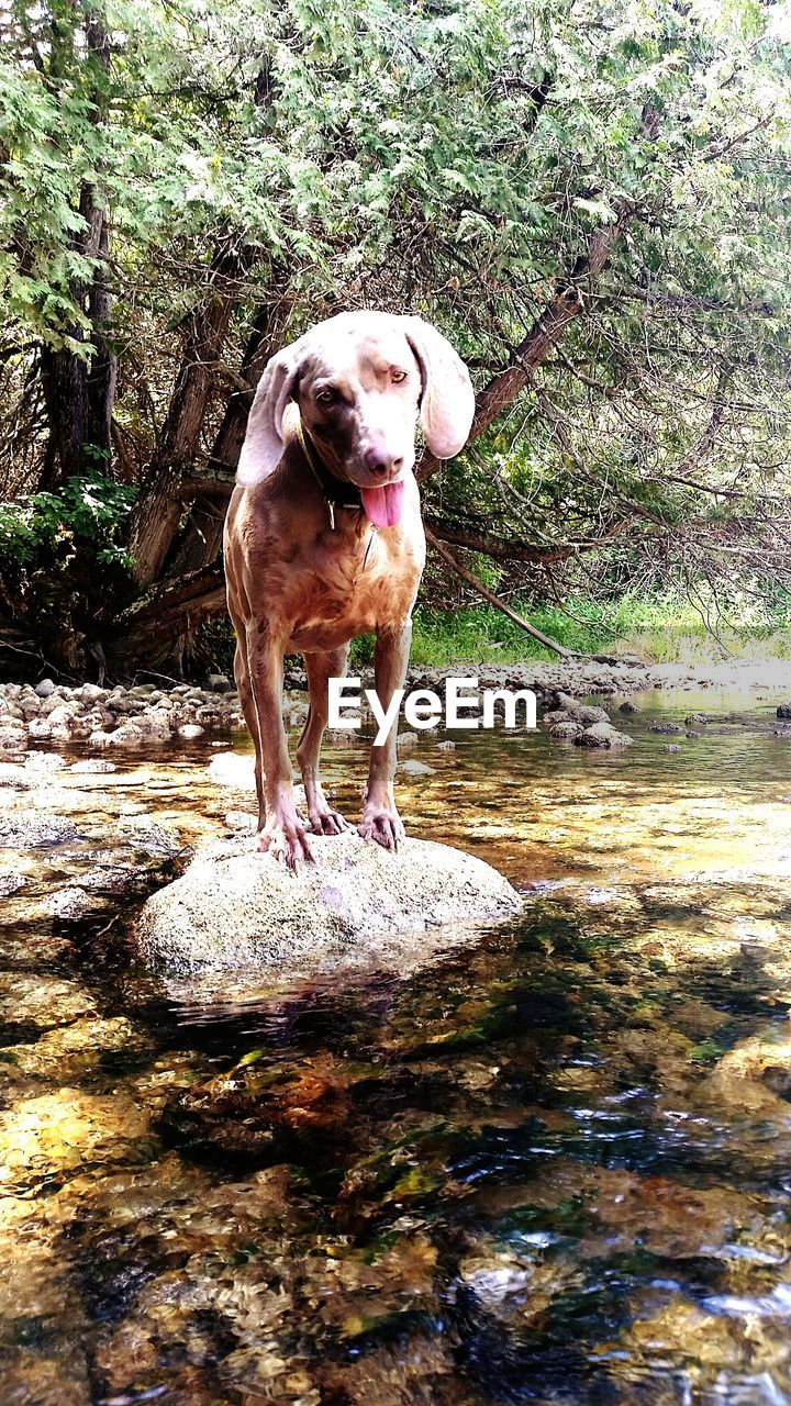 one animal, dog, canine, pets, animal, mammal, animal themes, domestic, domestic animals, vertebrate, solid, plant, rock, rock - object, day, no people, nature, tree, standing, water, outdoors