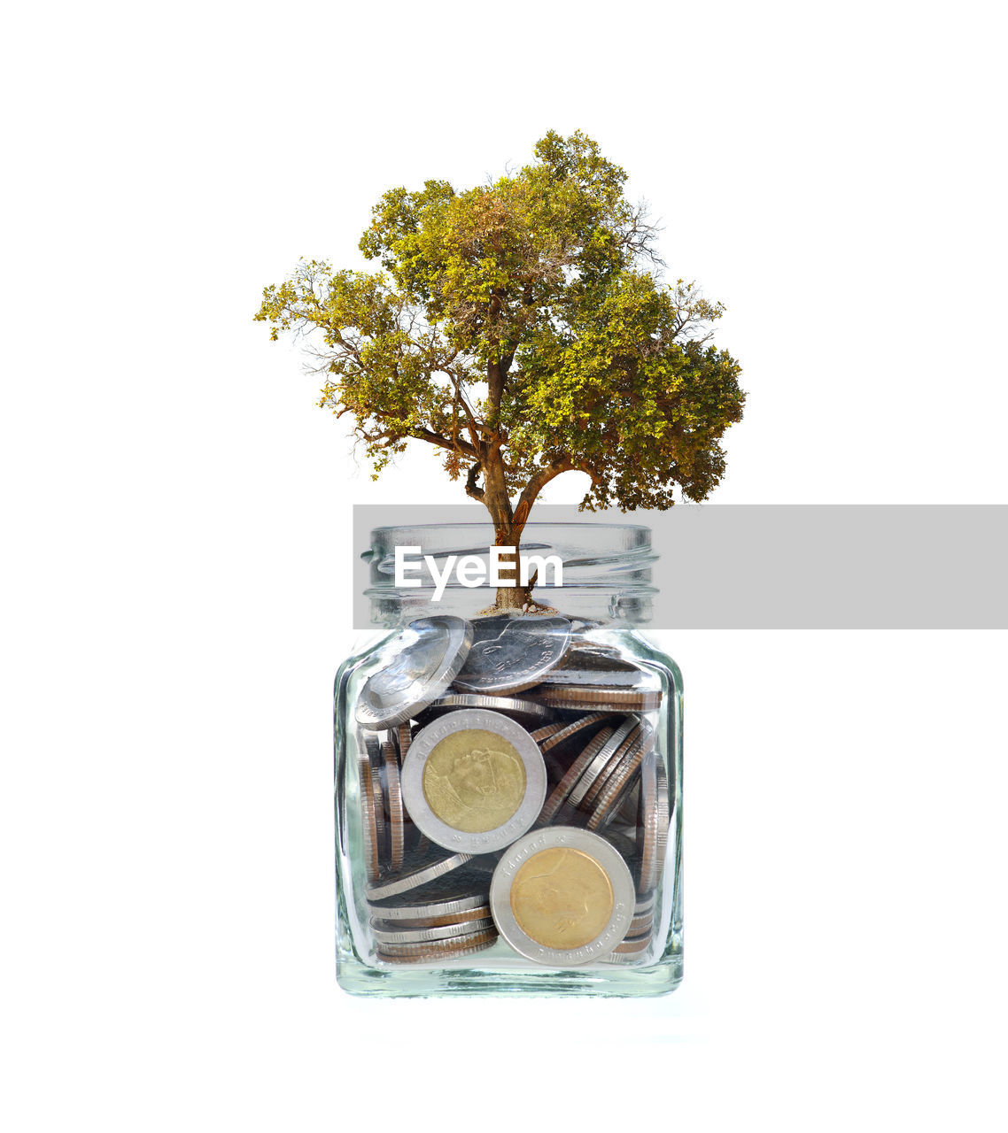 studio shot, white background, indoors, plant, tree, finance, no people, cut out, wealth, savings, growth, container, currency, jar, coin, business, close-up, nature, copy space, glass - material