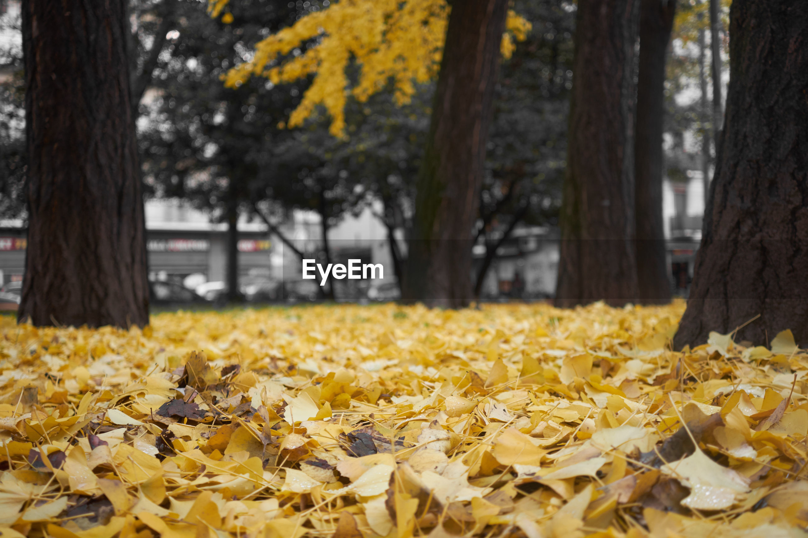 yellow, tree, nature, beauty in nature, growth, fragility, no people, autumn, flower, outdoors, day