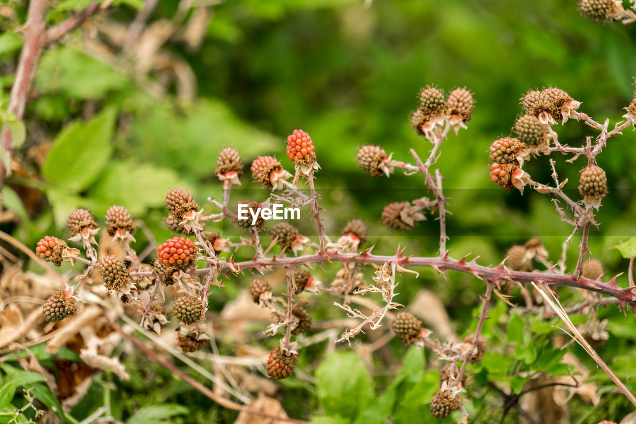 plant, growth, beauty in nature, close-up, nature, flower, day, plant part, no people, selective focus, leaf, vulnerability, fragility, focus on foreground, flowering plant, outdoors, freshness, green color, land, tranquility, flower head, wilted plant