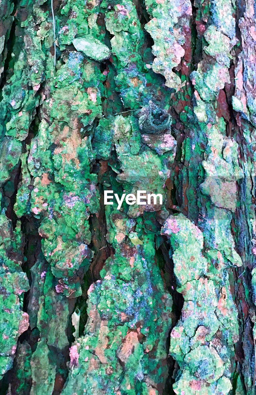 full frame, textured, backgrounds, growth, tree trunk, day, green color, close-up, no people, ivy, outdoors, rough, plant, bark, lichen, tree, fungus, fragility, nature