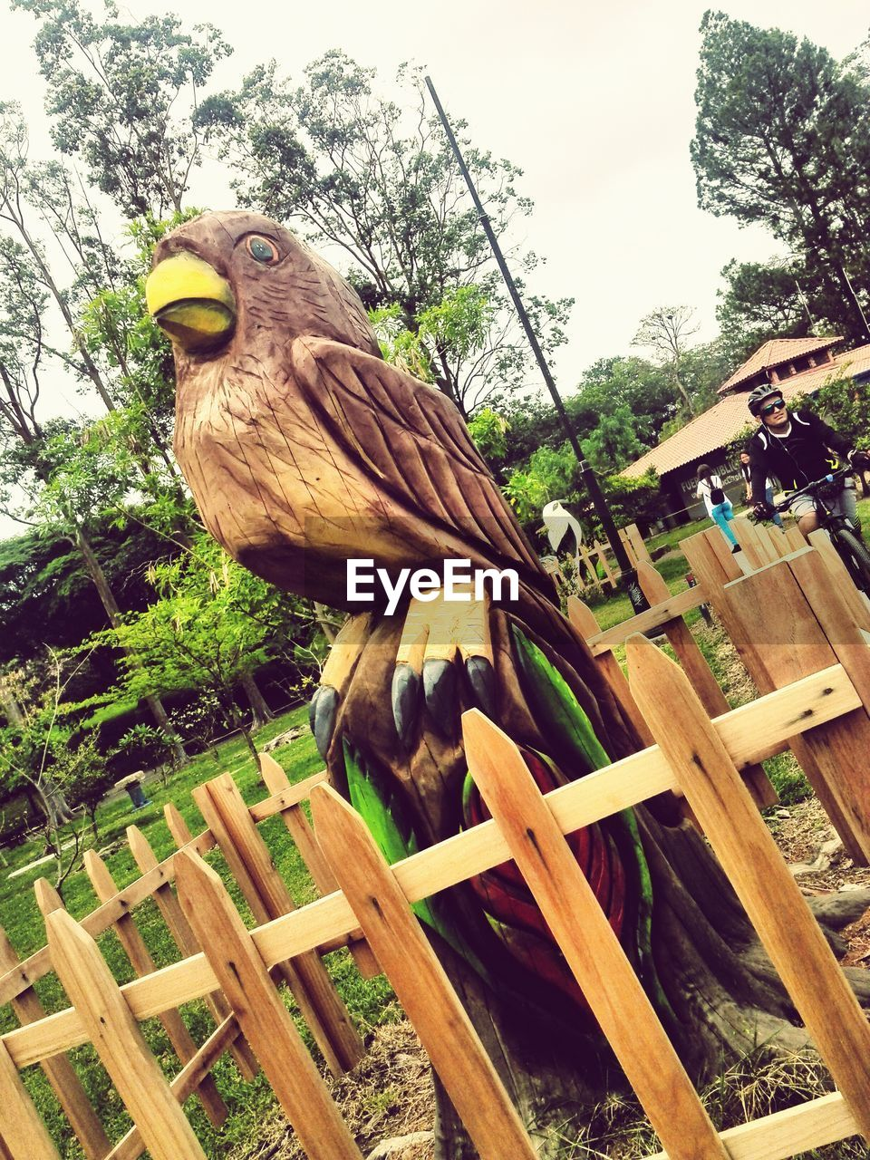 one animal, bird, animal themes, tree, no people, day, animals in the wild, perching, wood - material, outdoors, animal wildlife, plant, nature, close-up, bird of prey, sky