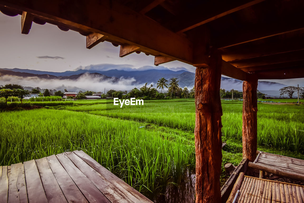 nature, wood - material, green color, beauty in nature, growth, field, agriculture, tranquil scene, tranquility, rural scene, landscape, no people, scenics, grass, sky, outdoors, day, rice paddy, tree