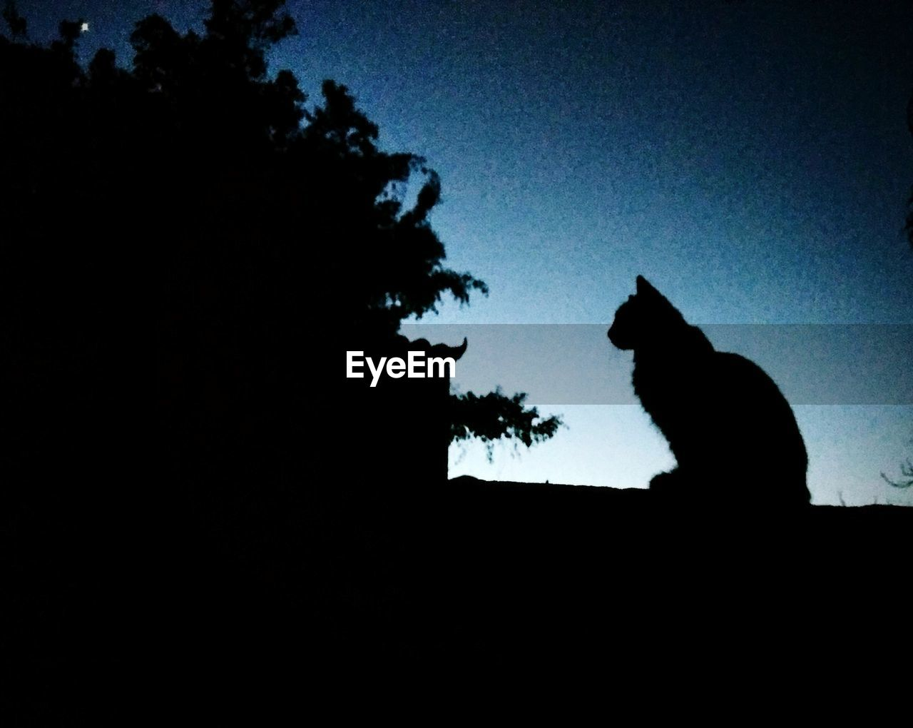 silhouette, sky, mammal, animal, animal themes, copy space, nature, one animal, no people, plant, vertebrate, tree, domestic, domestic animals, clear sky, pets, dusk, low angle view, cat, dark, outdoors