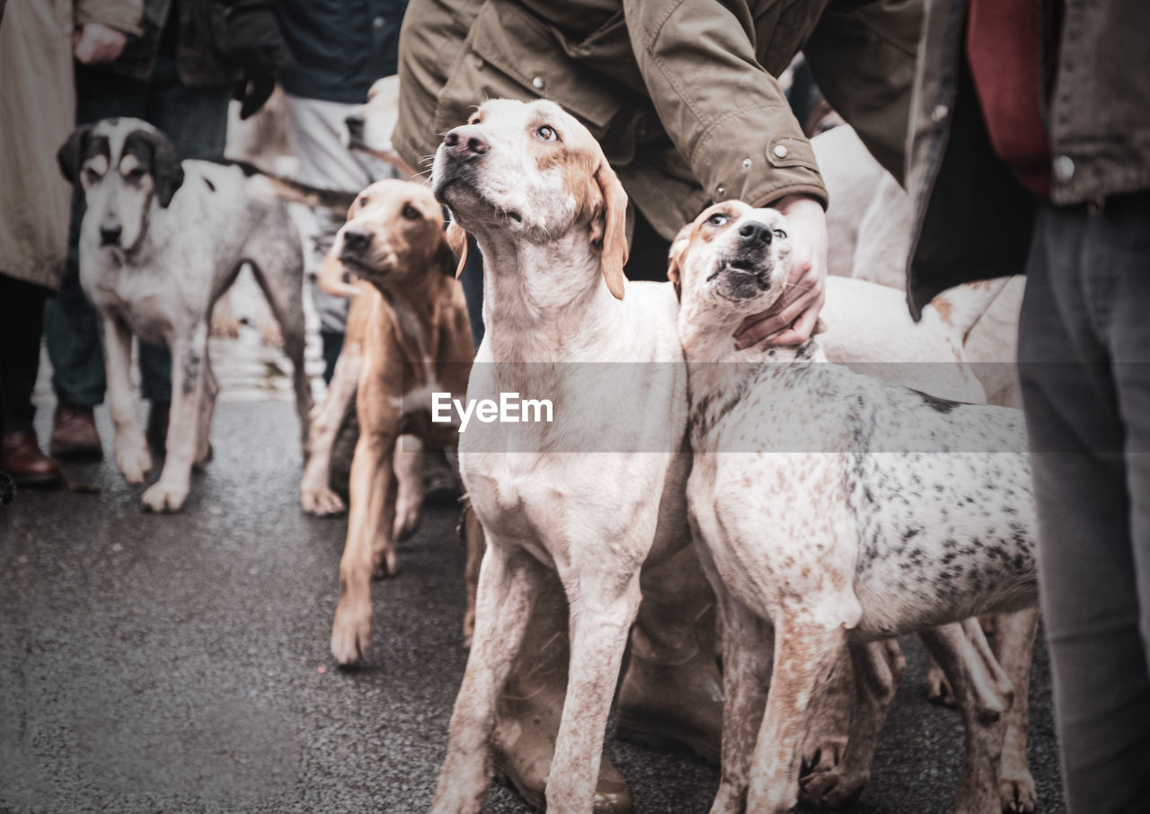 Group of people with dogs