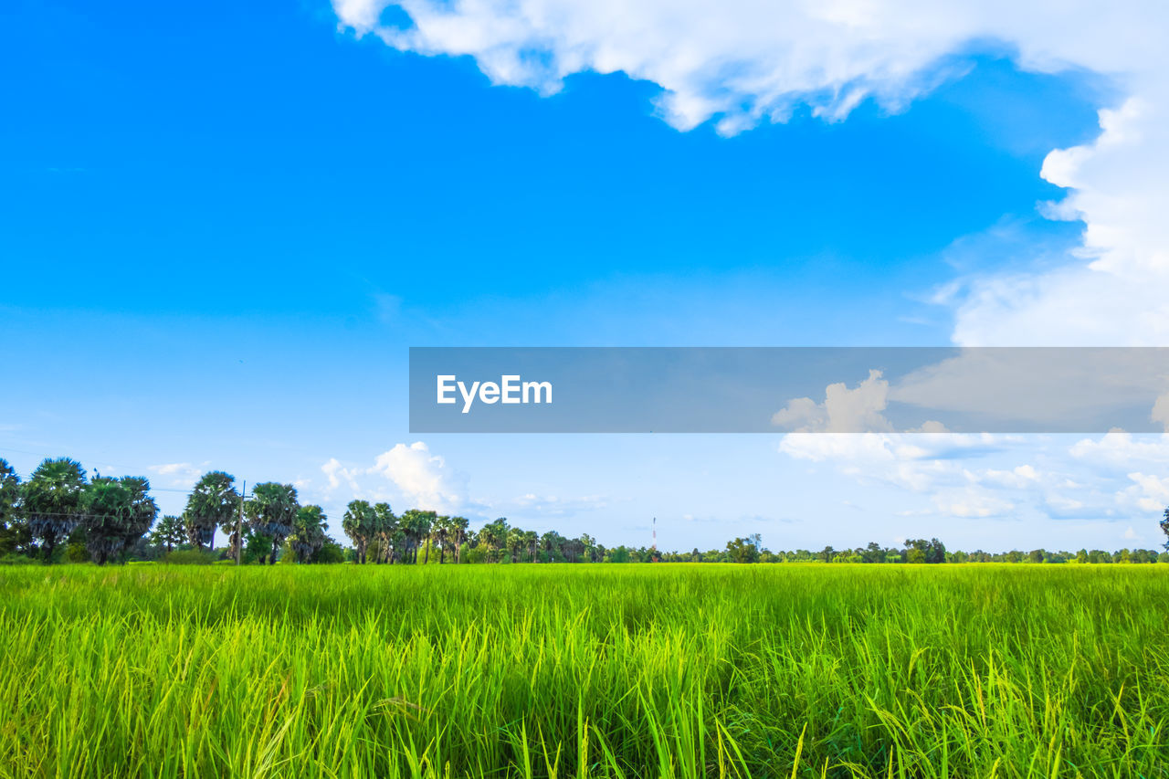 sky, plant, cloud - sky, field, green color, growth, landscape, environment, scenics - nature, beauty in nature, tranquil scene, land, rural scene, tranquility, blue, grass, agriculture, nature, day, tree, no people, outdoors